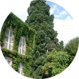 Un beau séquoïa d'une propriété autunoise.( © M Olivier Thiébaut (PNRM) )